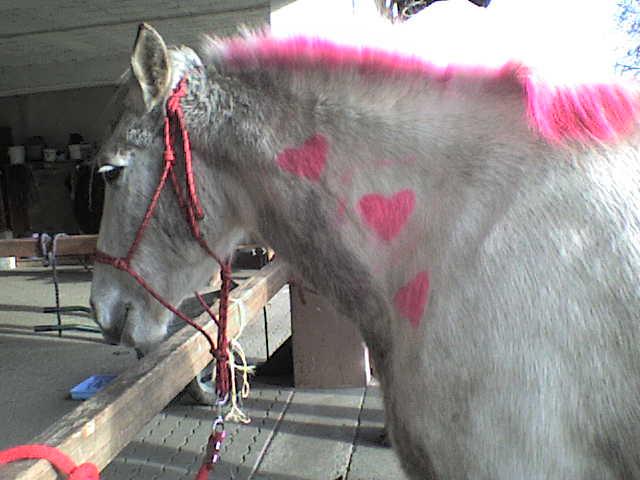 Roxane grisonne (sondage: votre cheval change de couleur?) Chevau10