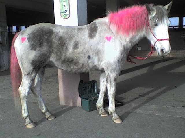 Roxane grisonne (sondage: votre cheval change de couleur?) Chevau11