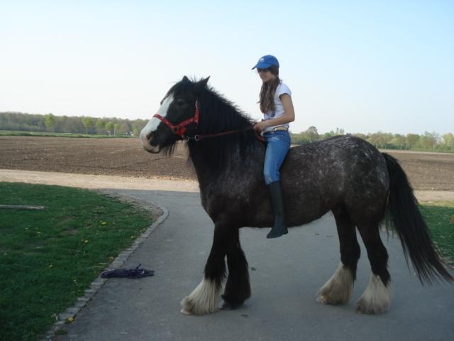 Roxane grisonne (sondage: votre cheval change de couleur?) Jennif11