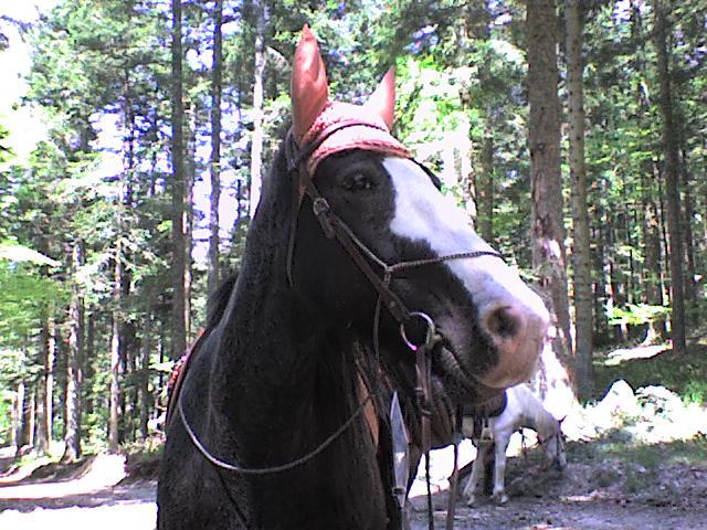 Roxane en rando chez les cow-boys (nouvelles photos !!!) Rando_31