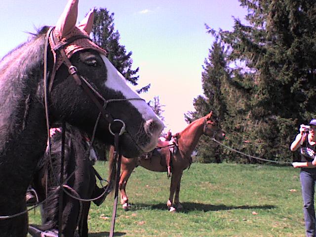 Roxane en rando chez les cow-boys (nouvelles photos !!!) Rando_33