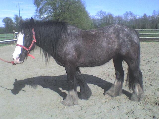 Roxane grisonne (sondage: votre cheval change de couleur?) Roxane20