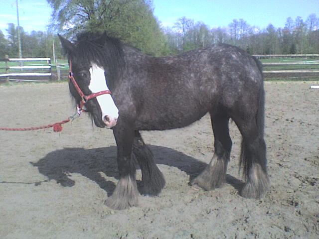Roxane grisonne (sondage: votre cheval change de couleur?) Roxane21