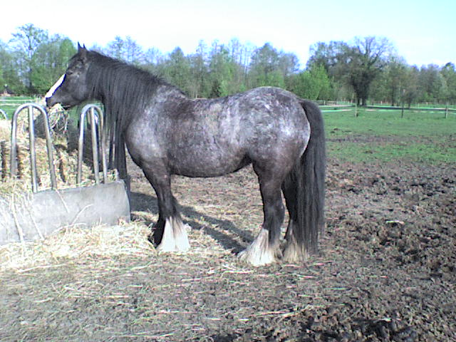 Roxane grisonne (sondage: votre cheval change de couleur?) Roxane22