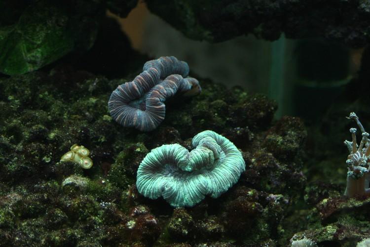 les coraux Img_2312