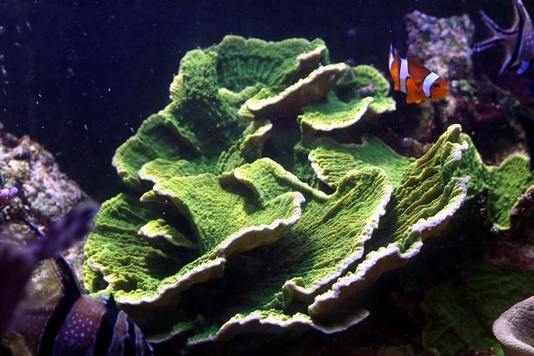 les coraux Img_2415
