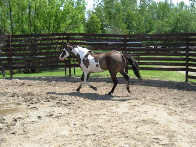 American Horse's Valley et ses Paint Horses... 15juin10