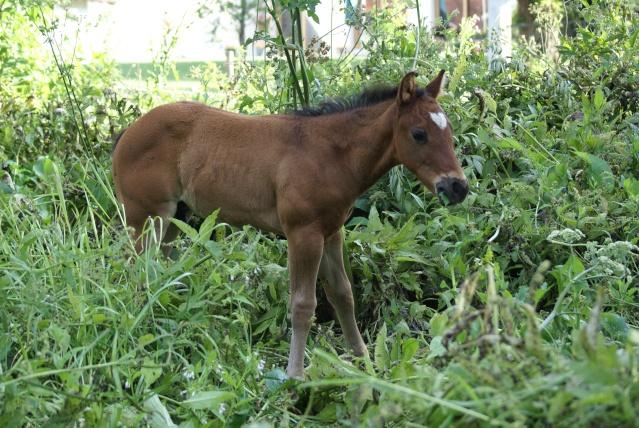 American Horse's Valley et ses Paint Horses... Dsc01011