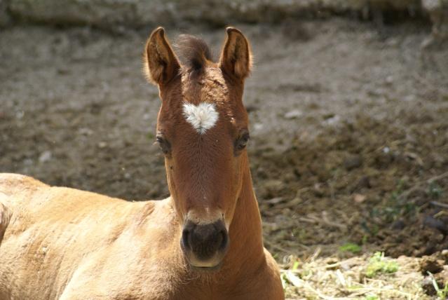 American Horse's Valley et ses Paint Horses... Dsc01310