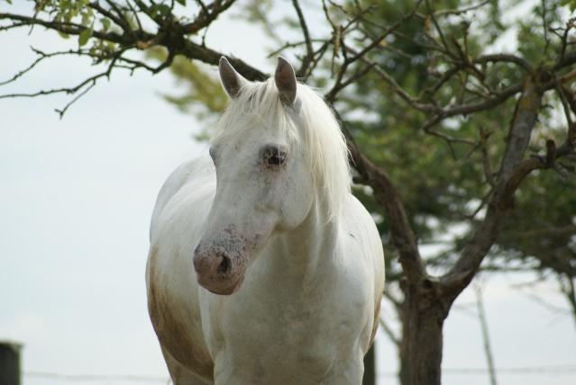 American Horse's Valley et ses Paint Horses... Dsc02610