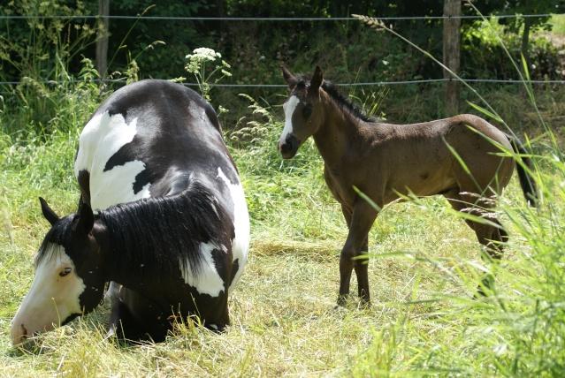 American Horse's Valley et ses Paint Horses... Dsc09711