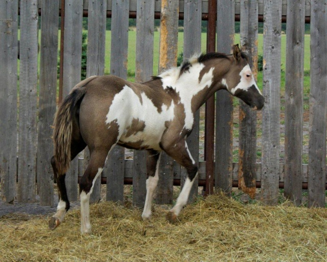 American Horse's Valley et ses Paint Horses... Fashio10