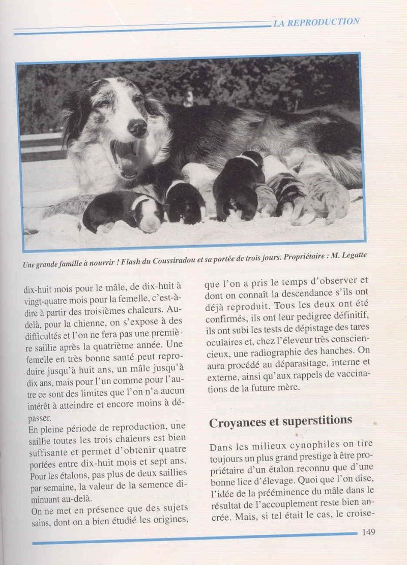 BLANC - croisement merles...? - Page 3 Border11