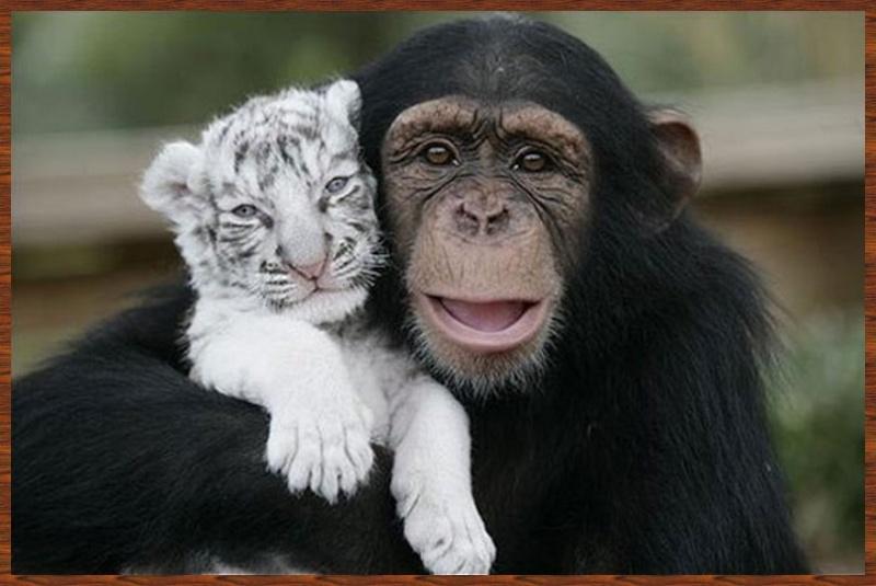 L'amitié chez les animaux A058a210