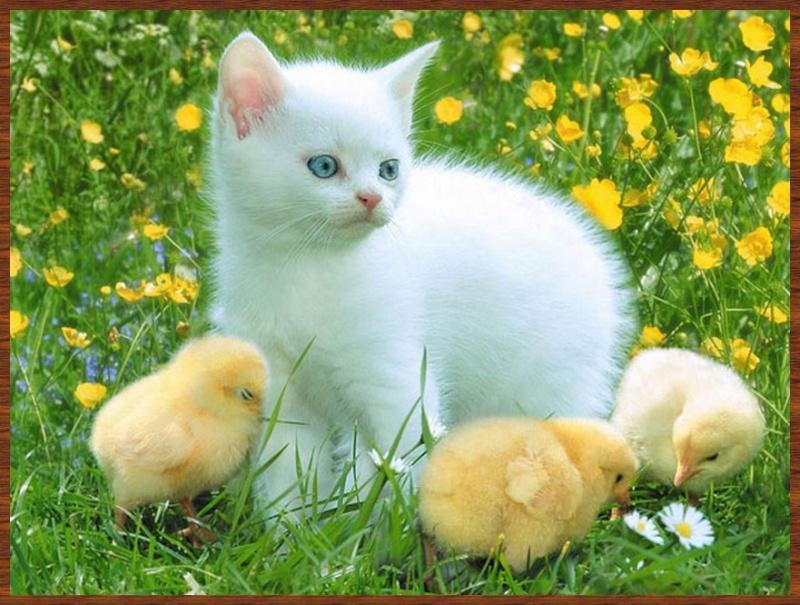 L'amitié chez les animaux A058a211