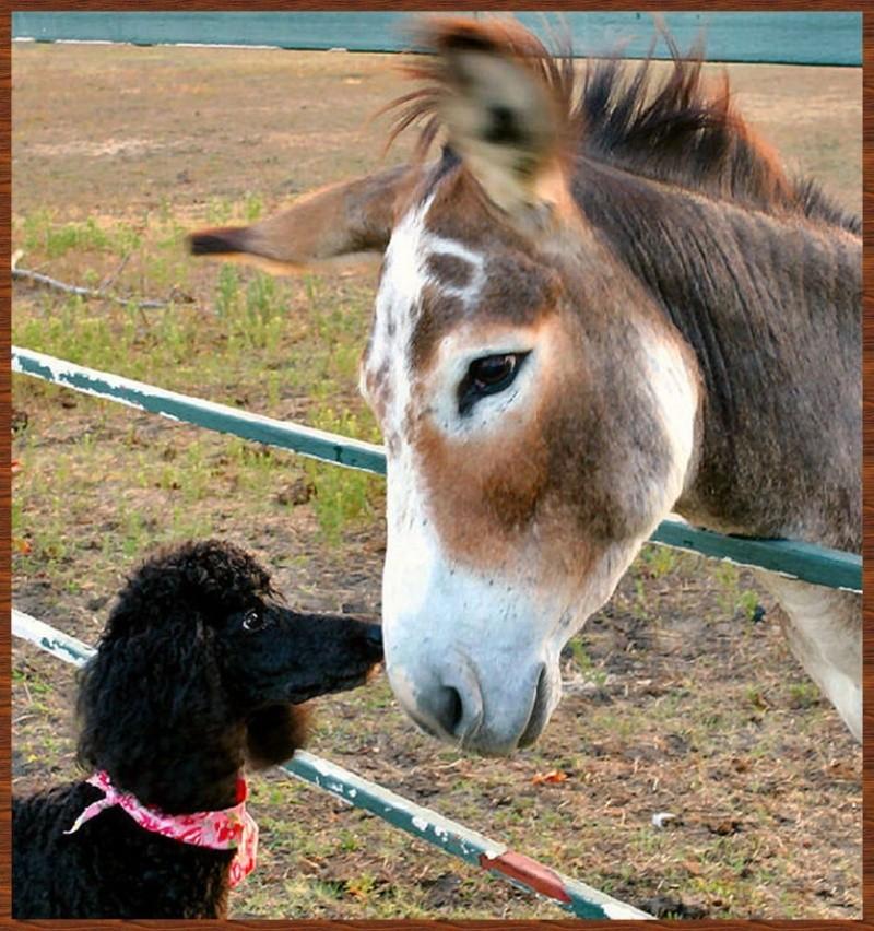 L'amitié chez les animaux A058a213