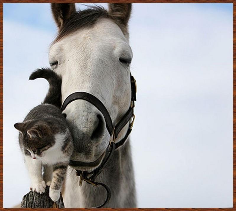 L'amitié chez les animaux A058a214