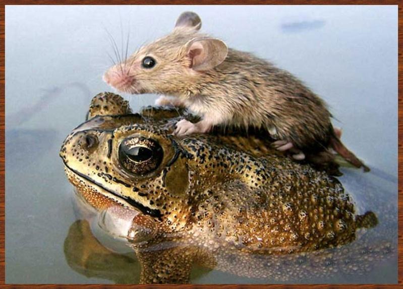 L'amitié chez les animaux A058a215