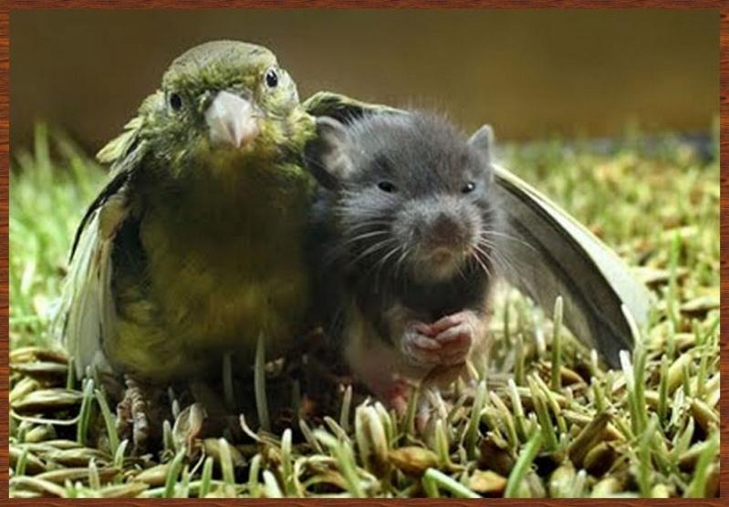 L'amitié chez les animaux A058a216