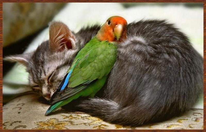 L'amitié chez les animaux A058a217
