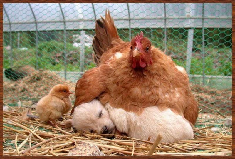 L'amitié chez les animaux A058a218