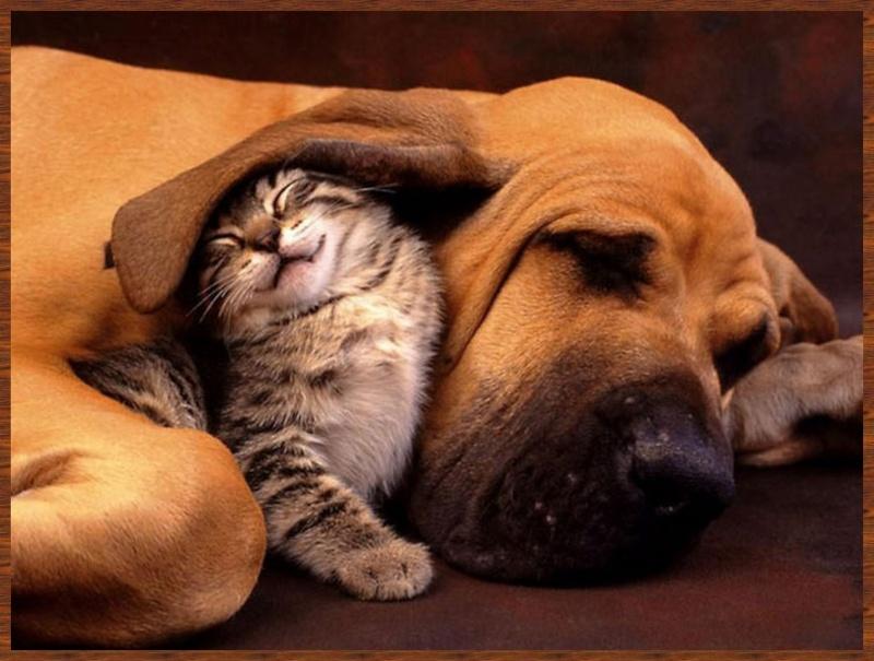 L'amitié chez les animaux A058a219
