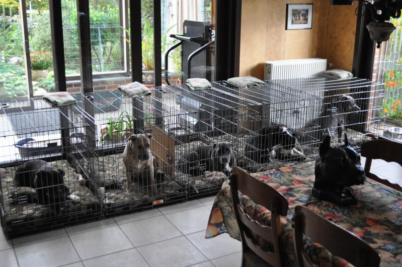 Caisse/cage de transport: utilisation - Page 8 Dsc_0020