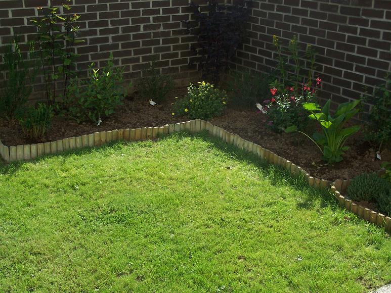 Des nouvelles de mon jardin 100_3523