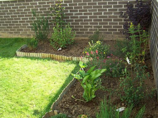 Des nouvelles de mon jardin 100_3525