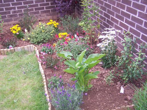 Mon jardin suite ..... 100_3536