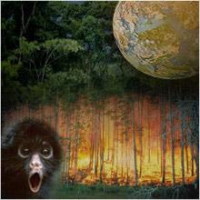 Nature & environnement: 2.000 milliards d'euros par an pour détruire la nature Defore10