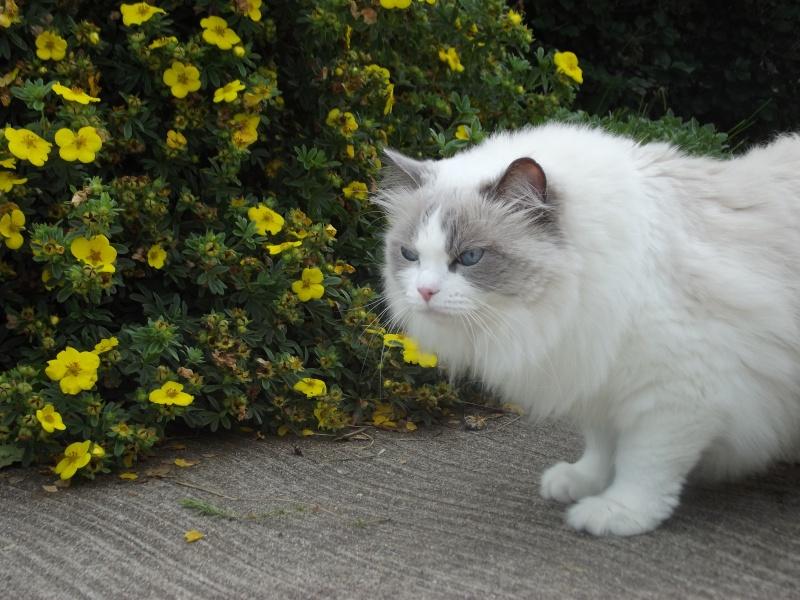 Tessa au jardin Dscf0222