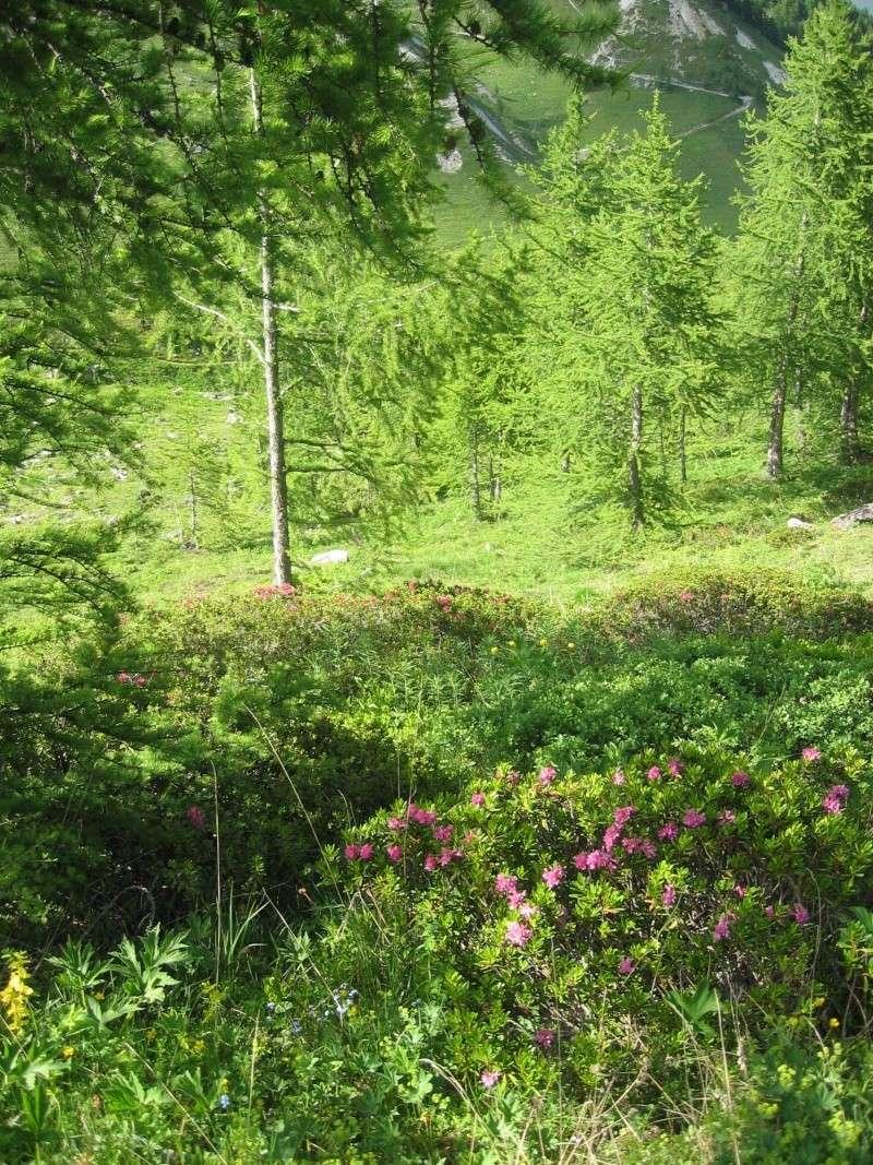 Petit tour dans le bois de la Laye Bois410