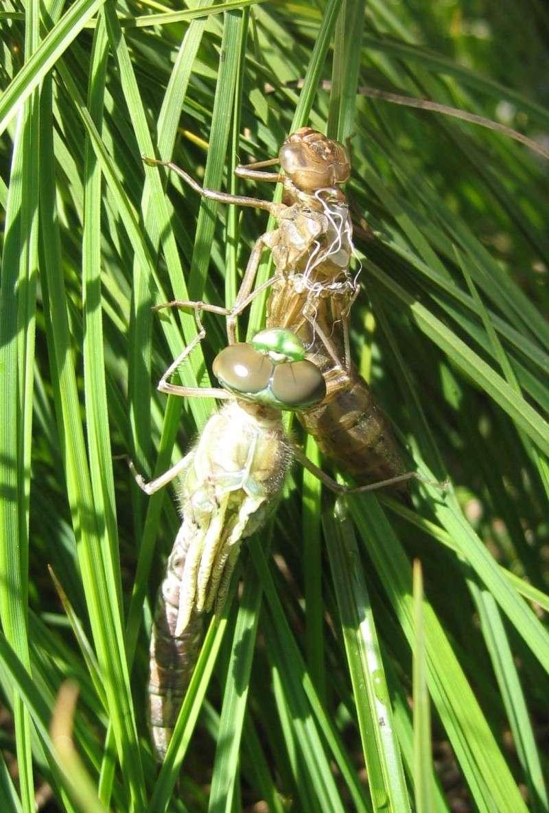 La faune en Haute-Tarentaise Libell12