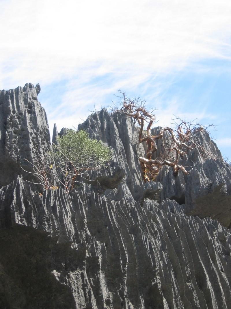 Madagascar Mada0016