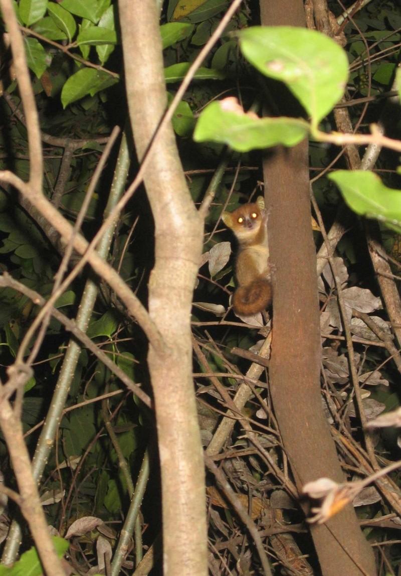 Madagascar Madaa410