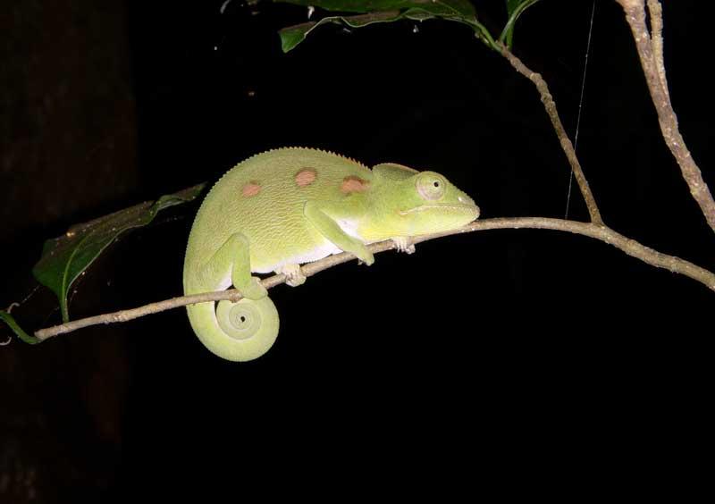 Madagascar Madaa510