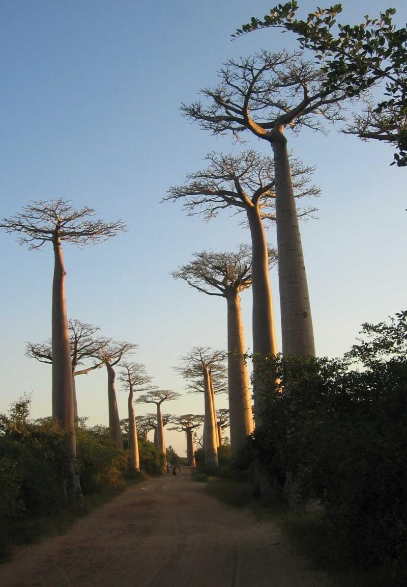 Madagascar Madaa910