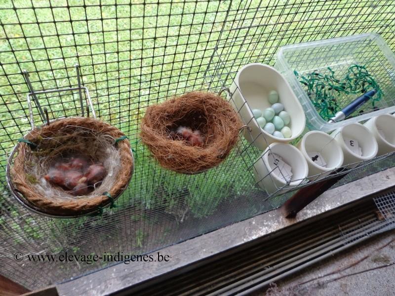 Contrôle des nids Dsc00419