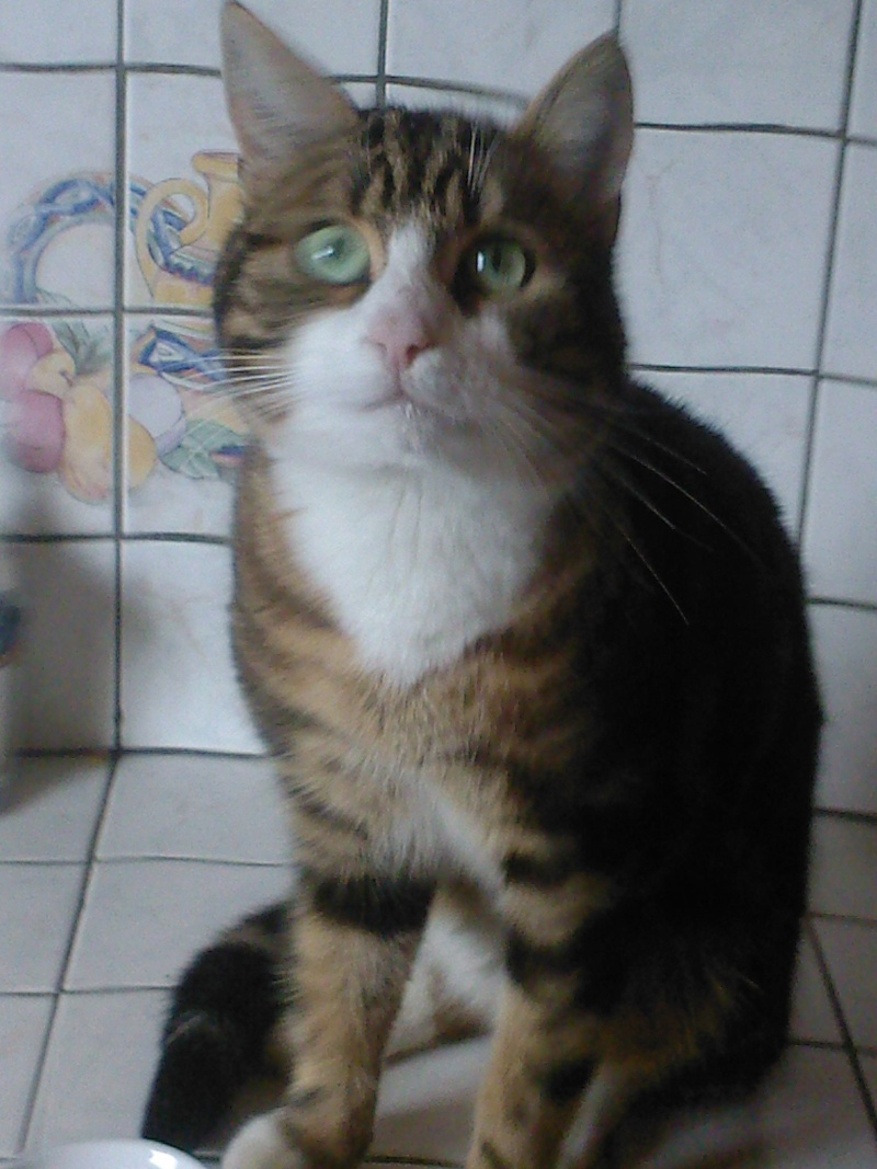 3 chatons (Flip, Grumeau, Chuppa) Flip_310