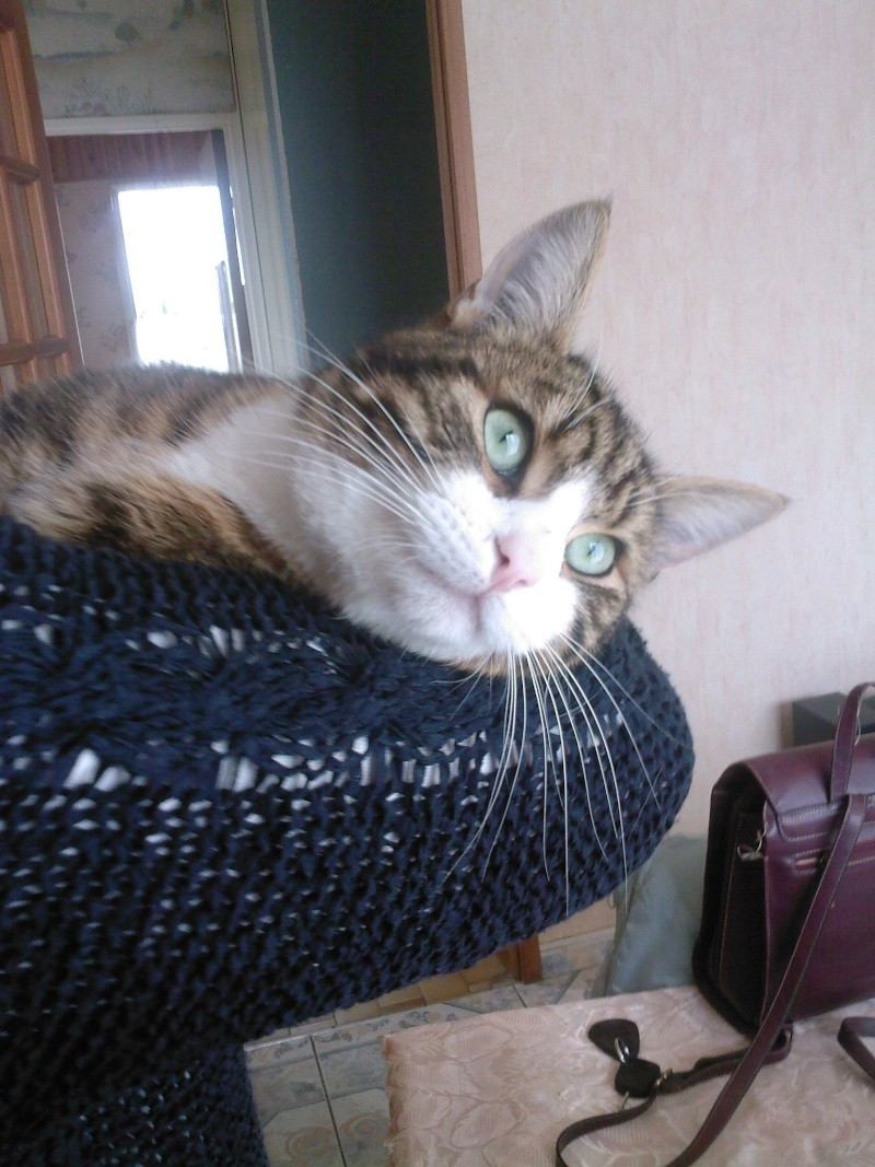 3 chatons (Flip, Grumeau, Chuppa) Flip_910
