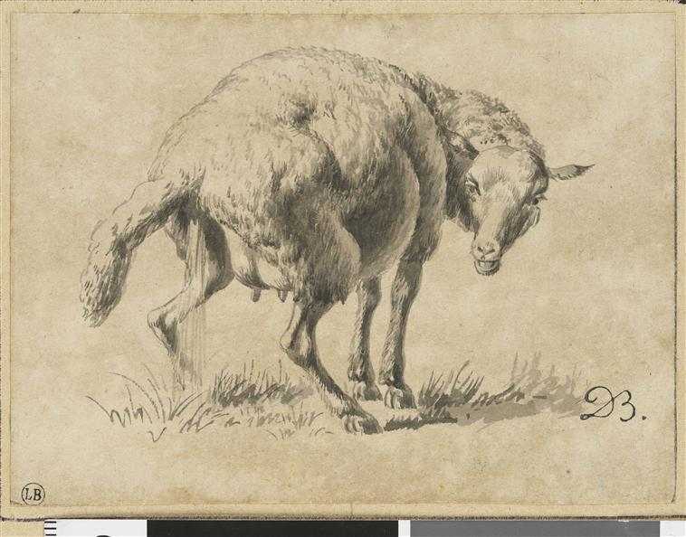 Les blancs moutons de Trianon - Page 2 Brebis11