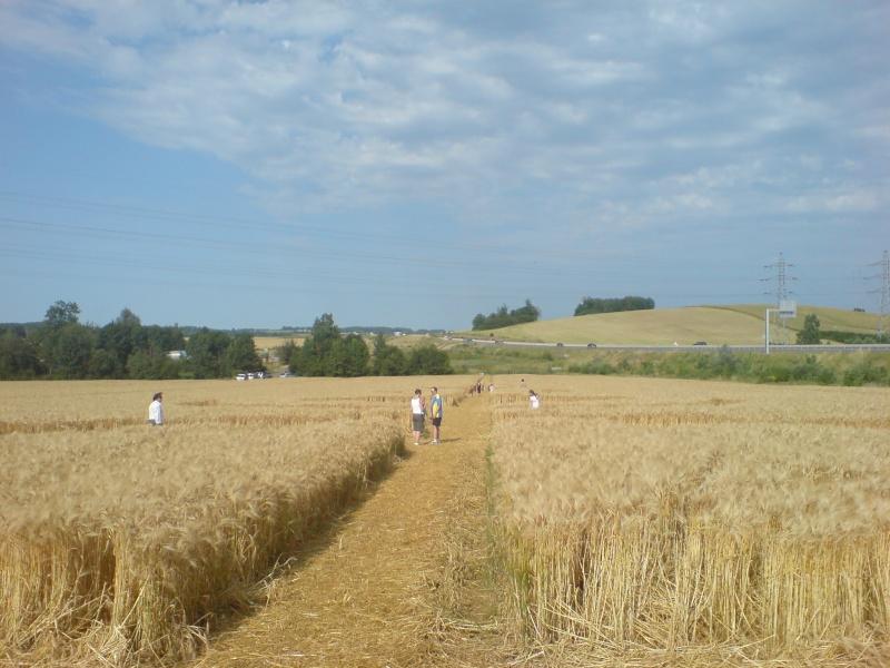 crop circle lorraine Dsc00010