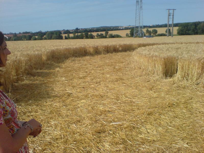 crop circle lorraine Dsc00011