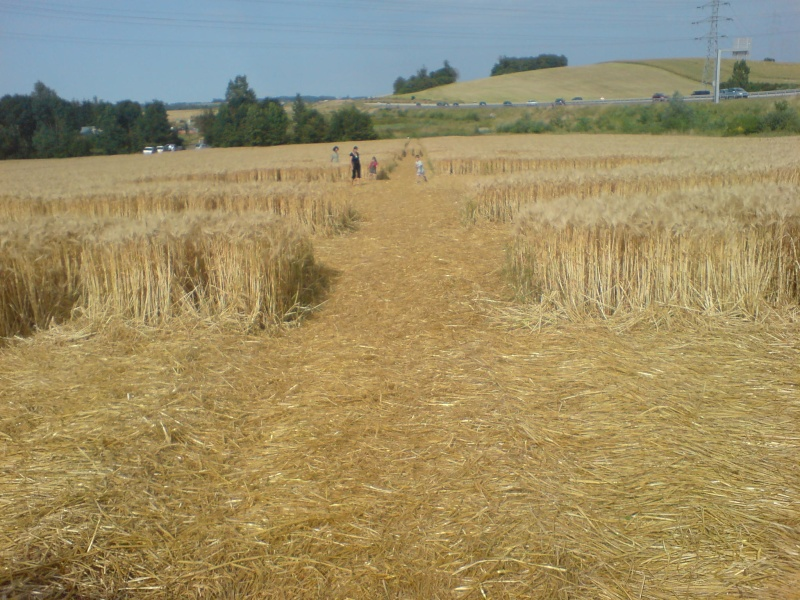 crop circle lorraine Dsc00012
