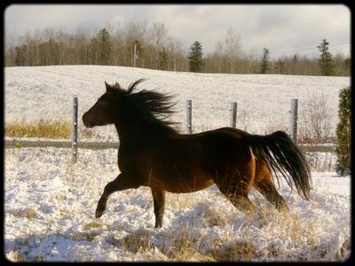 Pour Gaetane : Mes chevaux ! 28_oct10