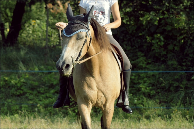 Douune - 20 ans - Dressage Img_4712