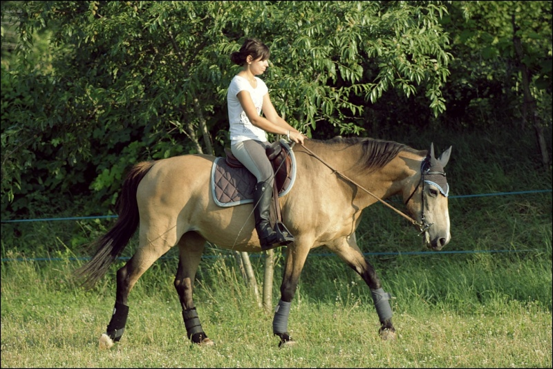 Douune - 20 ans - Dressage Img_4810