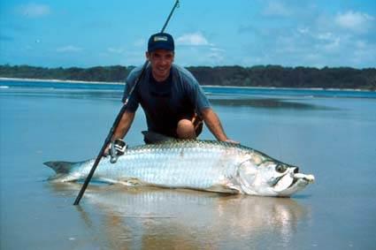 Réaction et defense d un poisson Tarpon10