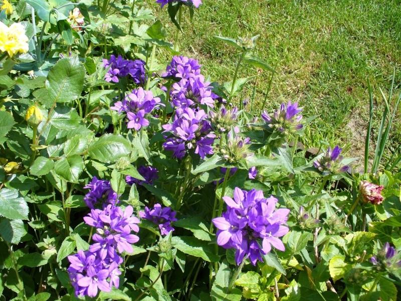 Cultivons notre jardin. Campa110